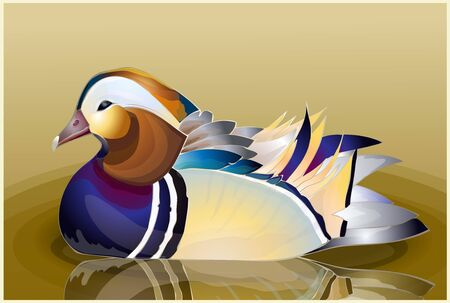 Closeup male mandarin duck (Aix galericulata) swimming, viewed of profile, with a large reflection in the water Illustration