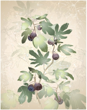 Detailed image of a bunch of figs on a tree. Figs in a fig tree.   Greeting card with fig tree. Ilustracja