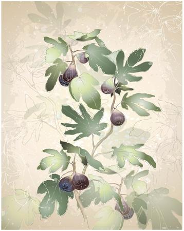 feuille de vigne: Une image détaillée d'un tas de figues sur un arbre. Les figues dans un figuier. Carte de voeux avec figuier. Illustration