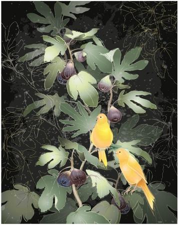 feigenbaum: Illustration der Kanarienv�gel sitzt auf einem Feigenbaum. Gru�karte mit Feigenbaum und Kanarien