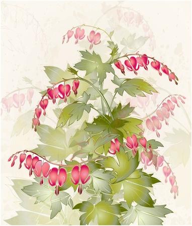 """hemorragias: Ilustración """"corazón sangrante"""" (Dicentra spectabilis). Tarjeta de felicitación con la flor. Colorida flor de primavera fresca."""