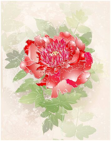 Greeting card with peony. Illustration peony. Vector