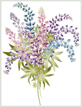 Background from flower of the lupine . Bouquet from a lupine flower.