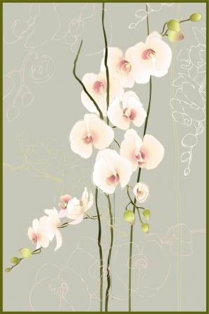 orchidee: Biglietto di auguri con orchidea. Illustrazione Orhid. Vettoriali