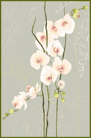 Greeting card with orchid. Illustration orhid. Vector