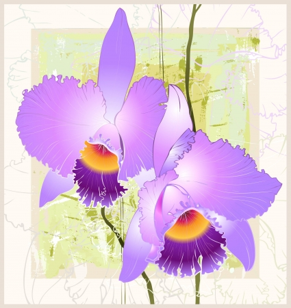epiphyte: Greeting card with orchid. Illustration orhid.