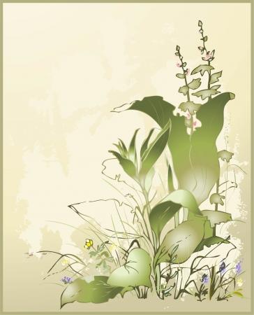wild grass: Tarjeta de felicitaci�n con una flor silvestre y una flor Ilustraci�n plantas silvestres y pasto silvestre