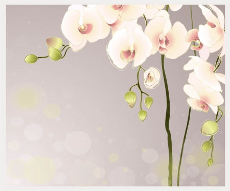 Greeting card with orchid. Illustration orhid.