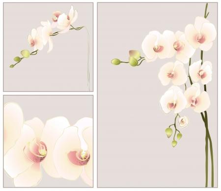 orchidee: Set di biglietti d'auguri con le orchidee.