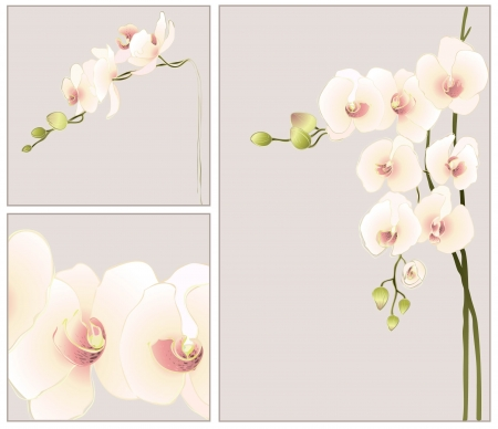 Set of greeting cards with  orchid. Vector