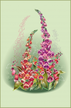 Greeting card with a foxglove. Illustration  foxglove. Vector