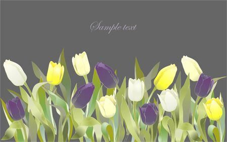 Tulip flowers border. Greeting card with tulips. Colorful fresh spring tulips. Vector