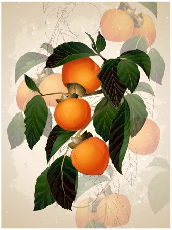 Illustration of a mature persimmon on a branch.