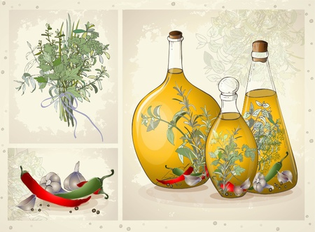 Illustration of spices, spicy herbs, olive oil.