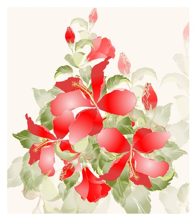 Greeting card with hibiscus. Illustration hibiscus. Vector