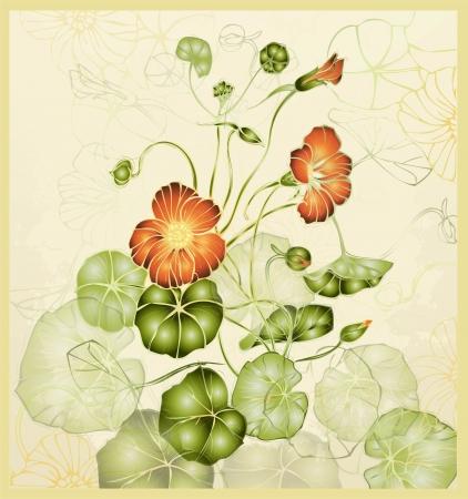 nasturtium: Greeting card with nasturtium. Illustration nasturtium. Beautiful decorative card with flowers.