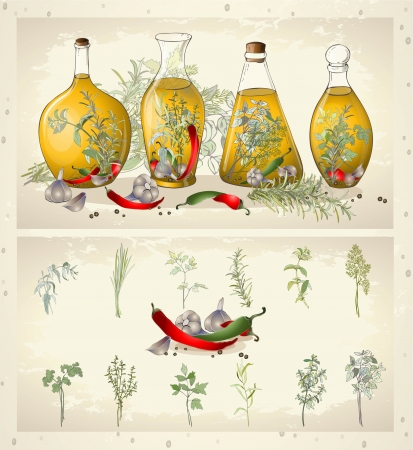 Illustration of spices, spicy herbs, olive oil. Vector