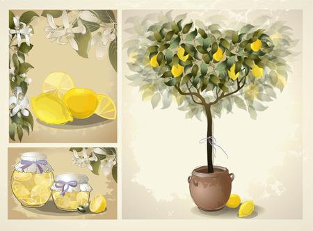Tree illustration with lemon fruits. Jam fruit. Preserved fruits. Icon. Illustration