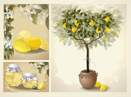 lemon tree: Tree illustration with lemon fruits. Jam fruit. Preserved fruits. Icon. Illustration