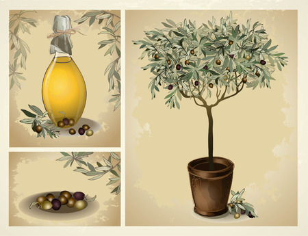 lass bottle of premium virgin olive oil and some olives with leaves. Illustration olive tree. Vector