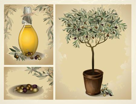 olive oil bottle: lass bottle of premium virgin olive oil and some olives with leaves. Illustration olive tree. Illustration