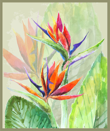 Greeting card with Bird of Paradise flowers. Illustration tropical flower Bird of Paradise. Vector