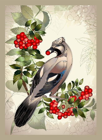 Bird a jay on a mountain ash branch.Greeting card with a bird.