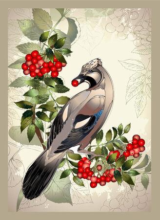 mountain ash: Bird a jay on a mountain ash branch.Greeting card with a bird.