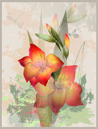 gladiolus: Greeting card with  gladiolus. Illustration gladiolus and dragonfly.