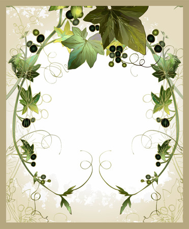 ivy: Decorative frame with ivy and berries. Vintage postcard with ivy and berries. Illustration the curling ivy with berries. Illustration