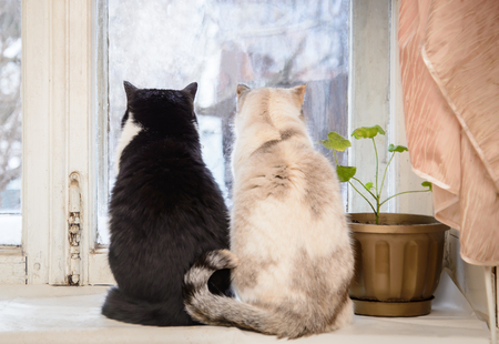 Two cats black and white grey and white sitting on the windowsill and stares into the old window on the street