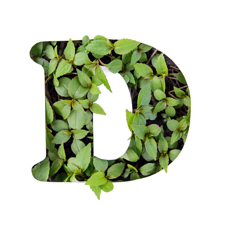Beautiful letter D of English alphabet made of green fresh leaves in white paper stencil