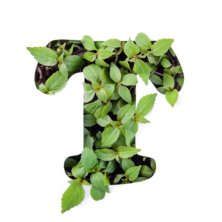 Beautiful letter T of English alphabet made of green fresh leaves in white paper stencil Stock Photo
