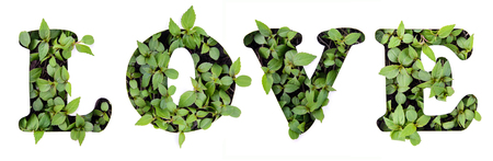 Word LOVE of beautiful green leaves in paper stencil of paper, isolate on white background