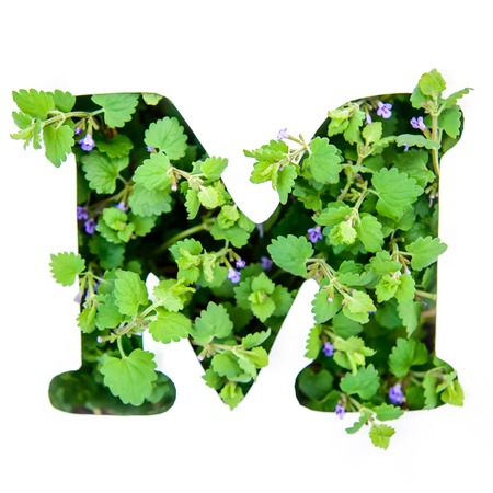 The letter M of the English alphabet of leaves of green plants in a white paper stencil