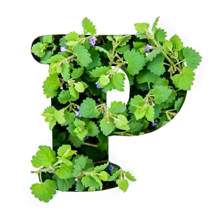 The letter P of the English alphabet of leaves of green plants in a white paper stencil Imagens