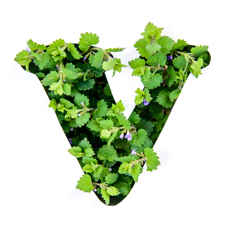 The letter V of the English alphabet of leaves of green plants in a white paper stencil