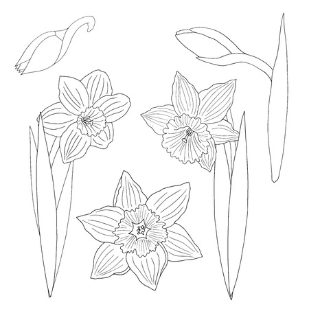 Doodle flowers daffodils. Coloring page for kids and adults Standard-Bild - 124750858