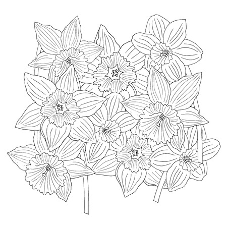 Doodle flowers daffodils. Coloring page for kids and adults Standard-Bild - 124750859
