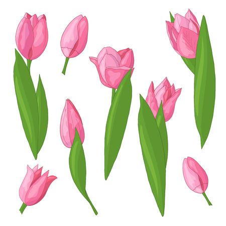 Vector set of beautiful spring pink tulips on white background