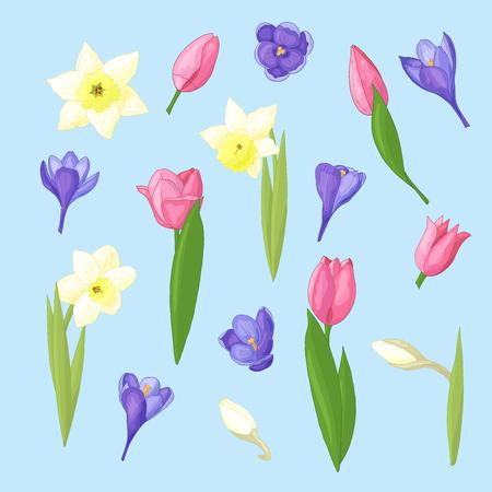 Frühlingsblumenset aus Narzissen, Tulpen und Krokussen auf blauem Hintergrund