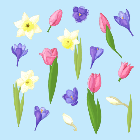 Spring floral set of daffodils, tulips and crocuses on blue background