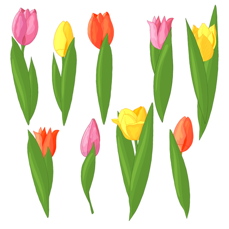 Vector set of colorful tulips: red, pink, yellow on a white background