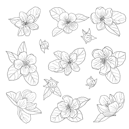 Hand-drawn apple blossom, coloring page anti-stress for children and adults Illustration