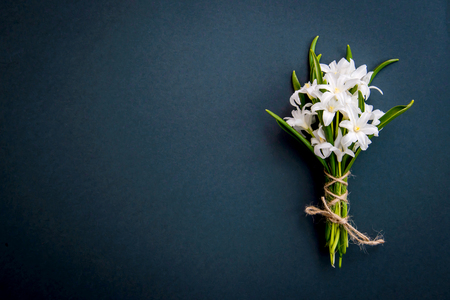 Small white spring flowers Chionodoxa on a dark green background with copy space Standard-Bild - 125735556