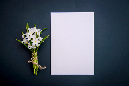 Small white spring flowers Chionodoxa and a piece of paper on a dark green background with copy space Standard-Bild - 125735561