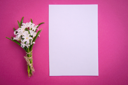 Bouquet of small white spring flowers Chionodoxa and a piece of paper on pink background with copy space Standard-Bild - 125735559