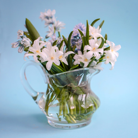 Bouquet of white spring flowers Chionodoxa in a small glass vase on a blue background Standard-Bild - 125735567