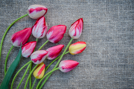 Beautiful bouquet of bright pink and yellow colorful tulips on canvas background with copy space Standard-Bild - 125735629