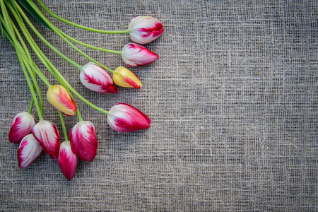 Beautiful bouquet of bright pink and yellow colorful tulips on canvas background with copy space Standard-Bild - 125735631